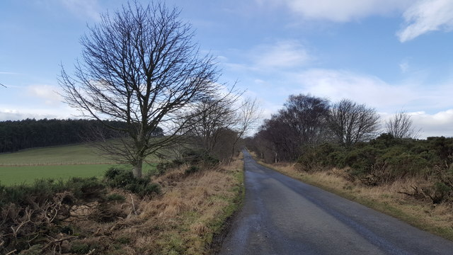The Blanchland road near West Minsteracres and Redhouse Plantation