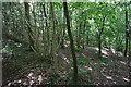 ST7965 : Wooded hillside on Bathford Hill by Bill Boaden
