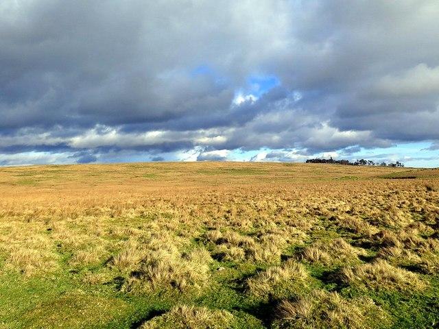 Brown Moor