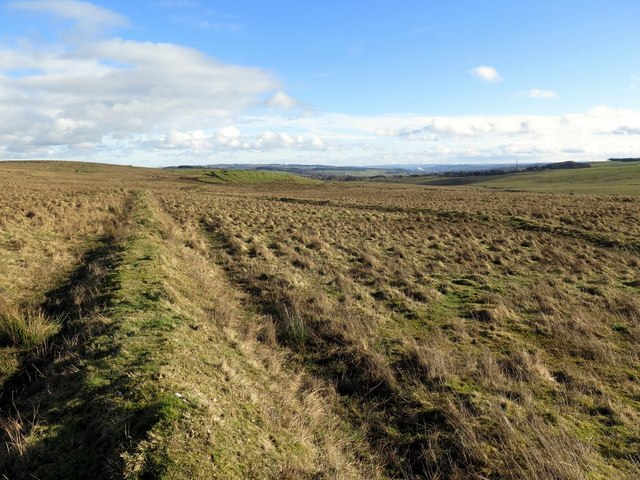 Old boundary bank east of Grindon