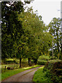 SJ5245 : Farm Road near Bell o' th' Hill in Cheshire by Roger  Kidd