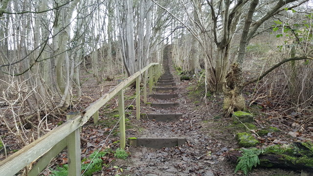 Steps on footpath between Tynedale Park and Farnley Grange