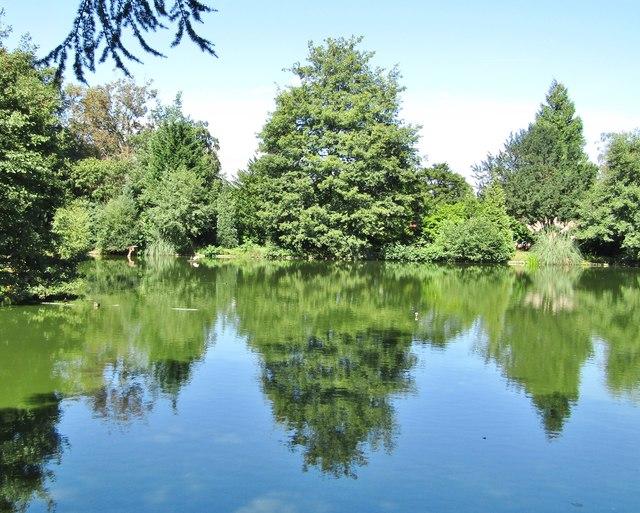 Merrist Wood - Pond