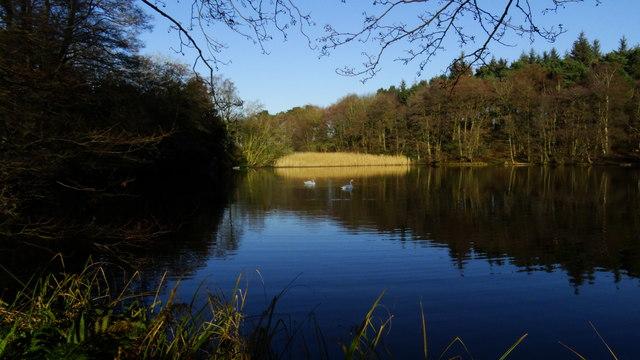 Eastern pond at Capesthorne Hall near Siddington