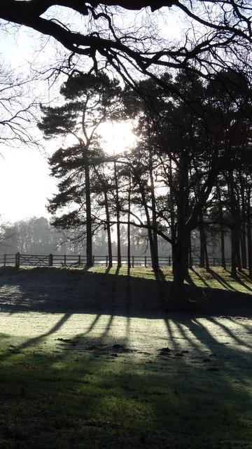Sunlight through trees on a frosty morning, Mottram St Andrew