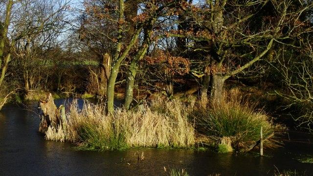 Pond with small island W of Newton Hall Farm near Dean Row