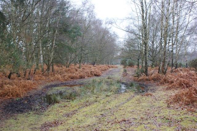 Muddy track, Wisley Common