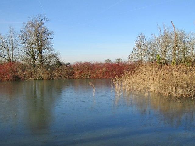 Hatchlands Park - Pond