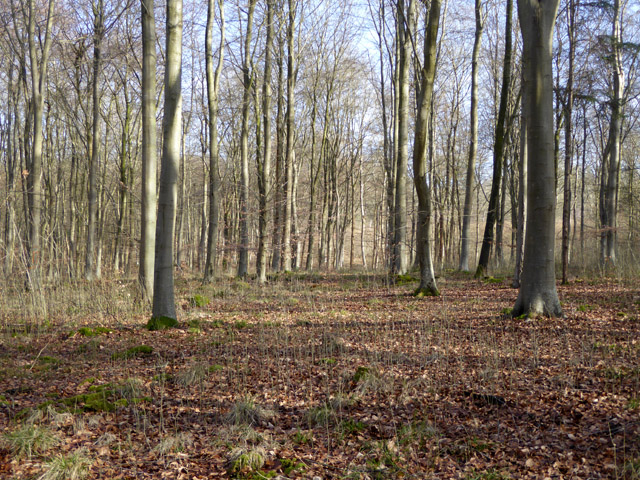 In West Wood