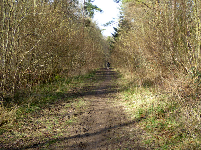 Path in West Wood
