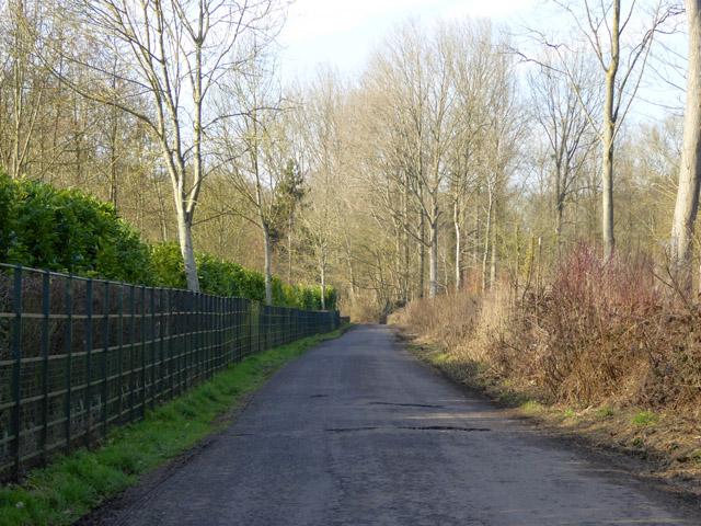 Lane towards Hurstbourne Priors