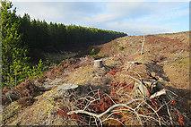 NJ2249 : Beside the Burn of Welltokie by Anne Burgess