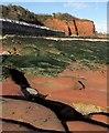 SX8961 : Rocks and Hollicombe Head by Derek Harper
