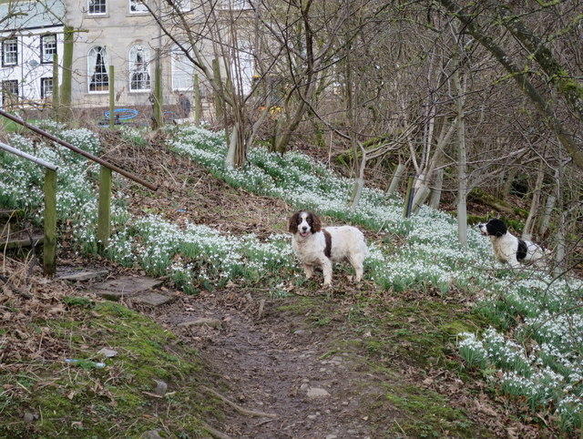 Amidst the Snowdrops at Waterfoot Hotel Farm