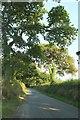 SX0764 : Road near Lanhydrock Hotel by Derek Harper