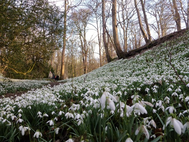 Down in The Dell - Snowdrops at Walsingham Abbey, Norfolk