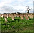 TG1923 : Marsham churchyard : Week 9