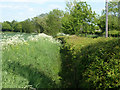 TL7020 : Ditch behind hedge near Frenches Green by Robin Webster
