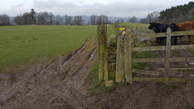 Footpath between Elrington Wood and Elrington