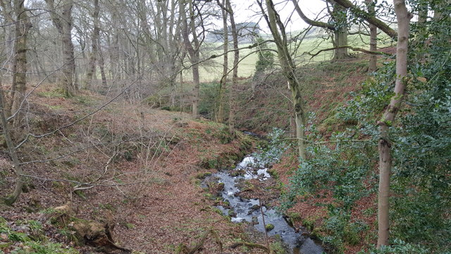Elrington Burn