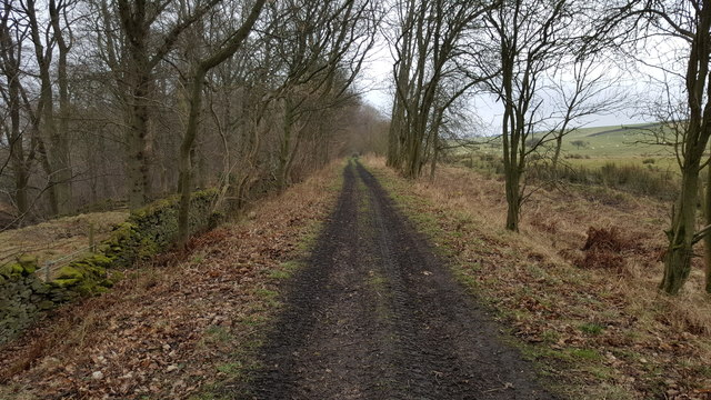 Disused railway trackbed of Allendale Branch line