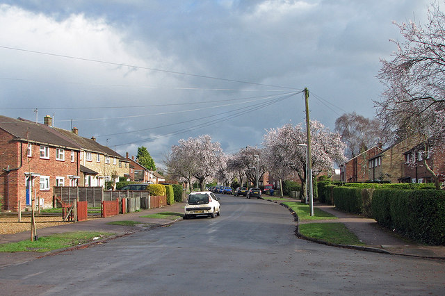 Gunhild Way: blossom and rainclouds