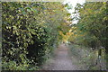 TL4953 : Footpath, Gog Magog Hills by N Chadwick