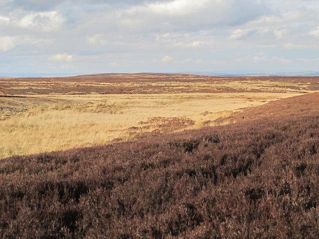 Burntridge Moor south of Great Lawsley