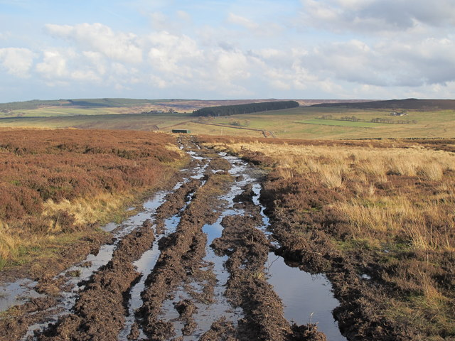 Damp path on Burntridge Moor north of Westburnhope