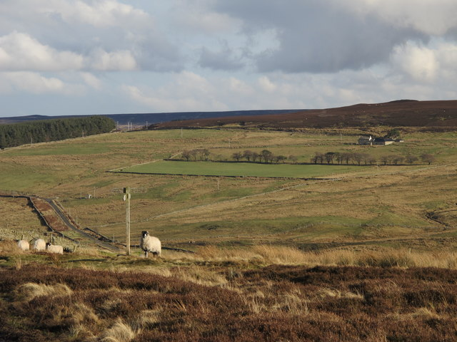 The Westburnhope Valley below Cocker Shield