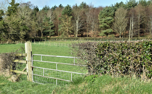 Field gate, Ballyhenry Major, Newtownards/Comber - March 2017(1)