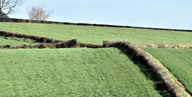 Hedges and drumlins, Ballyrainey, Dundonald/Comber (March 2017)