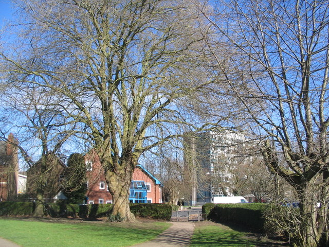 Commemorative tree, Broomfield Park
