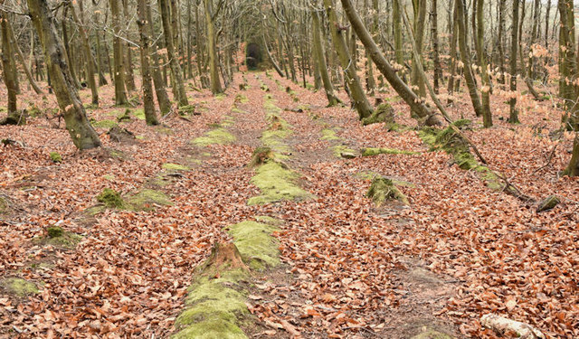 Creighton's Wood, Ballymenagh, Holywood - March 2017(2)