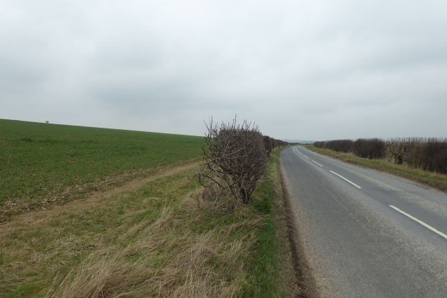 Hedgerow between Kirby Grindalythe and Thirkleby