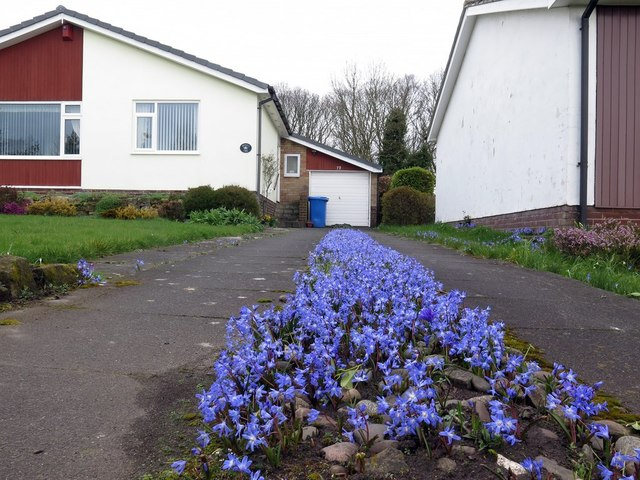 Spring driveway in blue, Trajan Walk, Heddon on the Wall