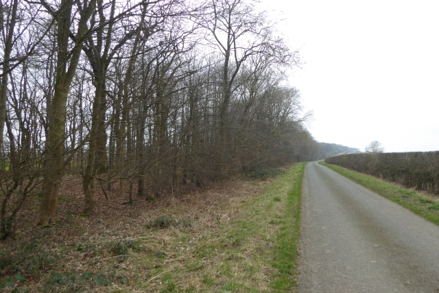 Road beside High Mowthorpe Plantations