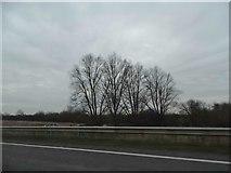 TL0146 : The Branston Way, Kempston by David Howard