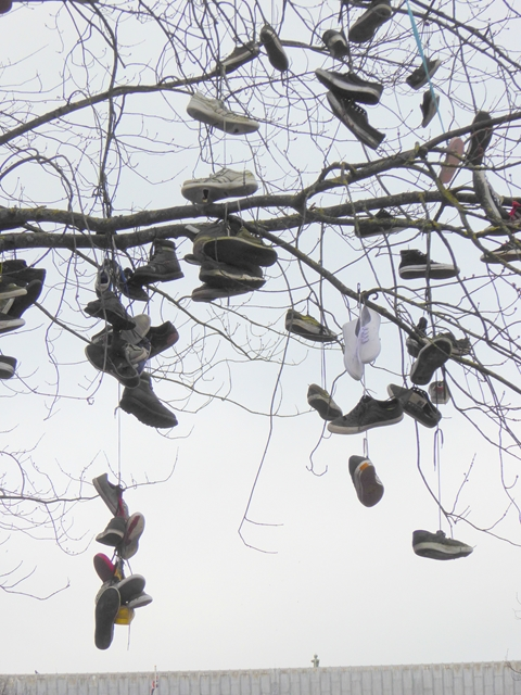 Shoes suspended from a tree on College Green - detail