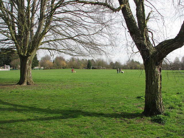 Coleridge Rec: out with the dogs