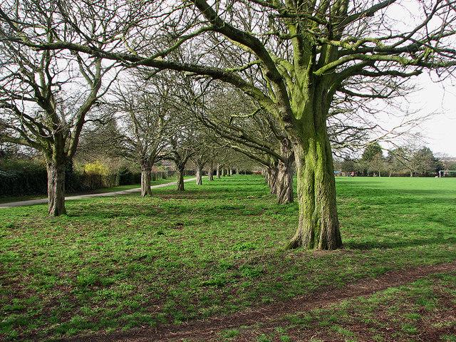 Coleridge Rec: perimeter trees