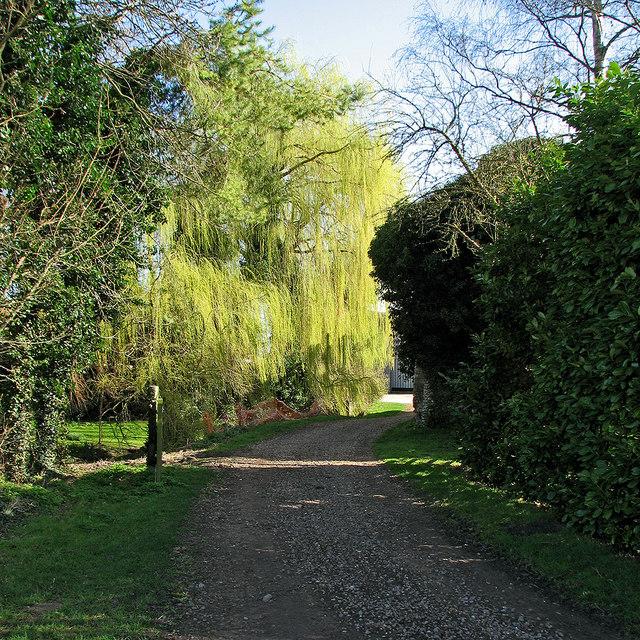 Spring willow at Hawk Mill Farm