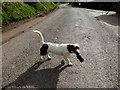 H5357 : Dog with rodent, Beltany by Kenneth  Allen