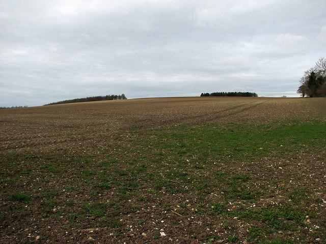A flinty field near Lidgate