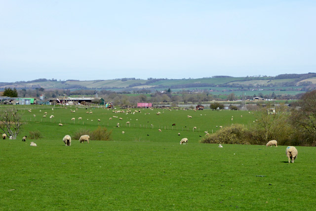 Sheep farming, Harringe Court