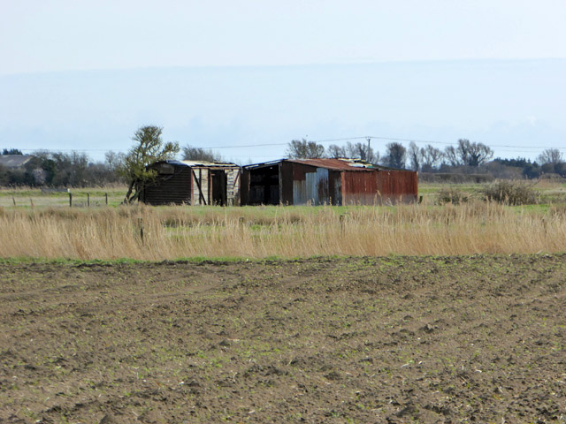 Sheds on Romney Marsh