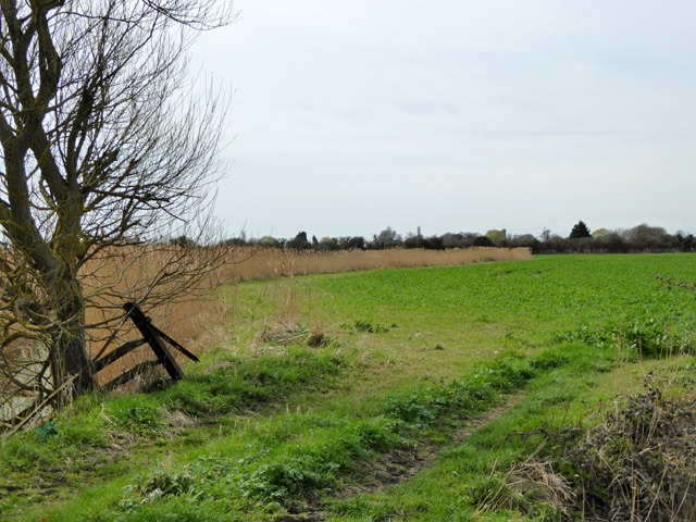 Field west of Gammon's Farm Lane