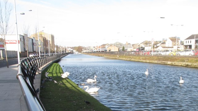 Mute swans on the Newry Canal