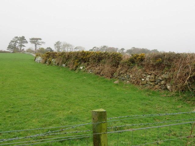 Ancient wall and Ward boundary