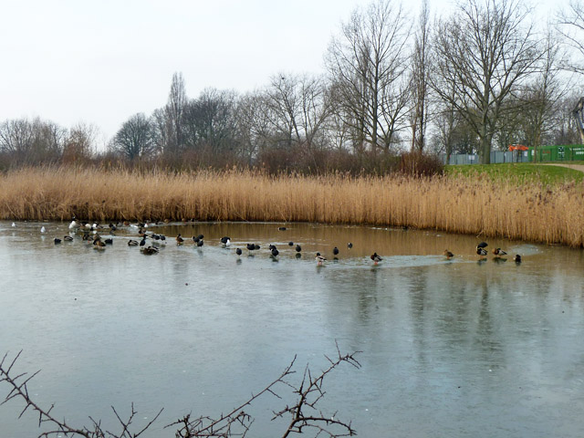 Partly frozen pond, Sutcliffe Park